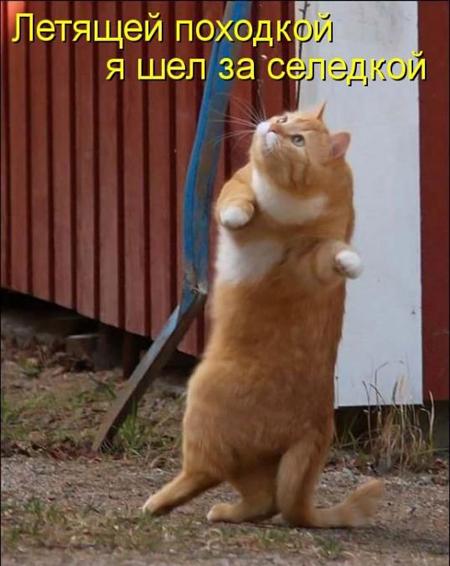 Кот и его обязанности, юмор